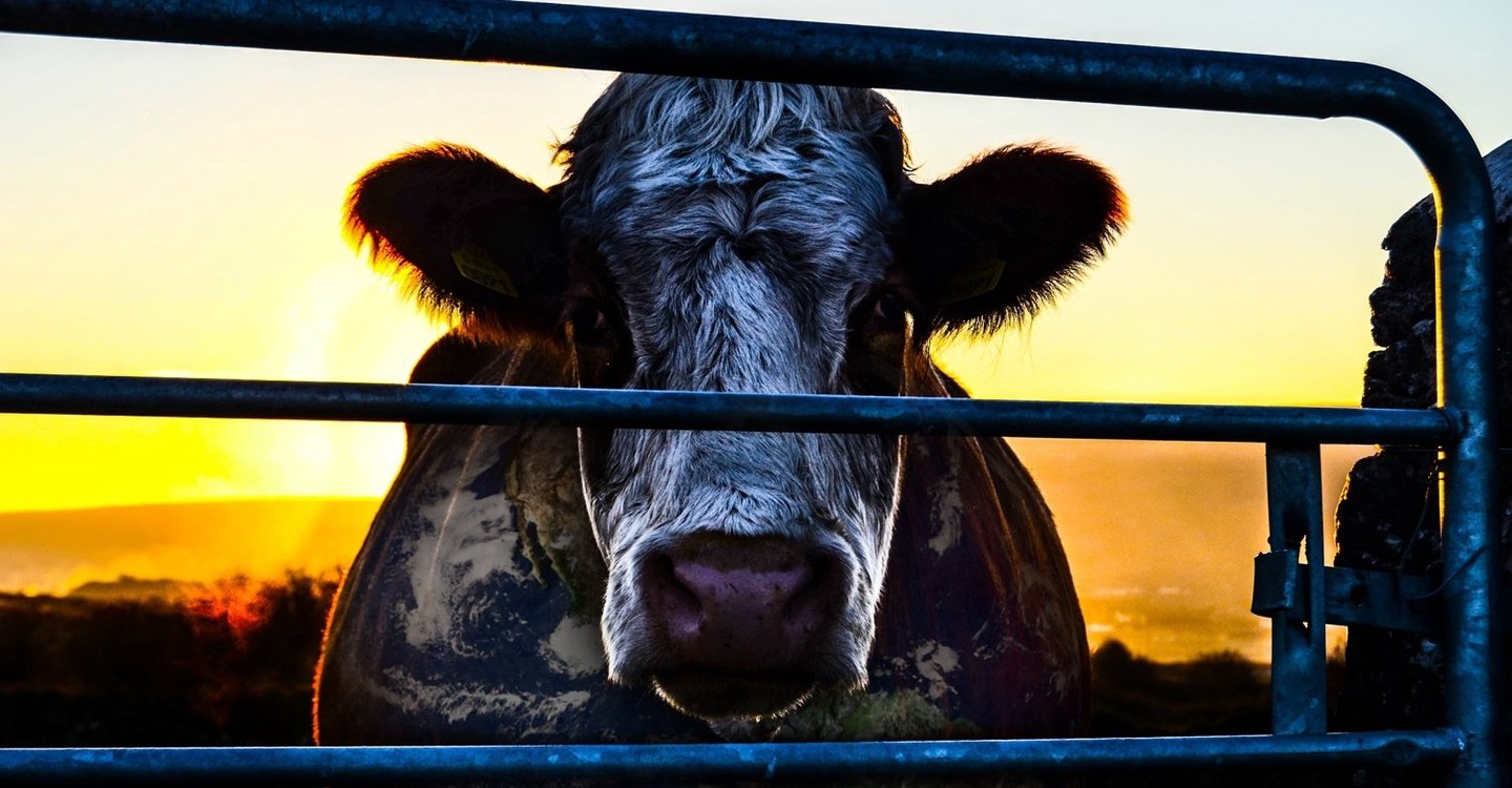 Cowspiracy: The Sustainability Secret backdrop 1