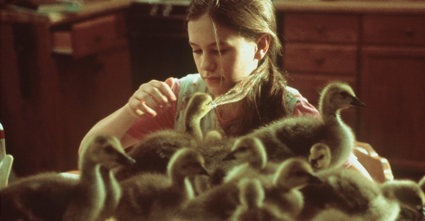 Fly Away Home Streaming Where To Watch Online