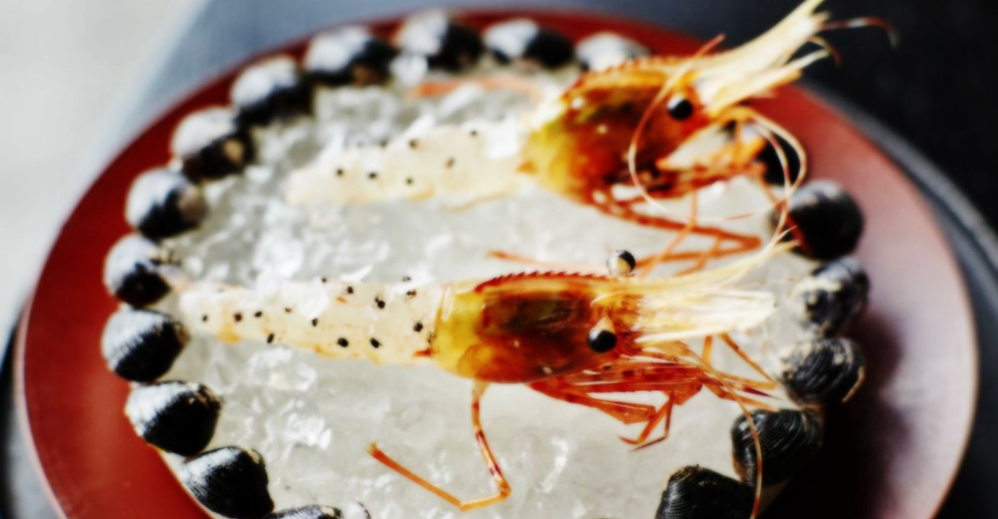 Ants on a Shrimp backdrop 1