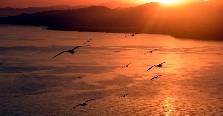 jonathan livingston seagull movie youtube