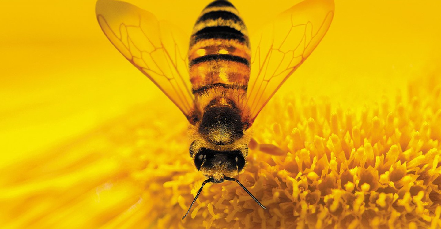 More Than Honey backdrop 1