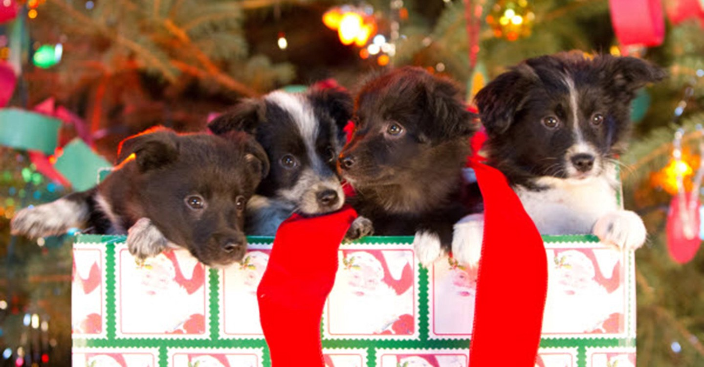 12 Dogs Of Christmas.12 Dogs Of Christmas Great Puppy Rescue Streaming
