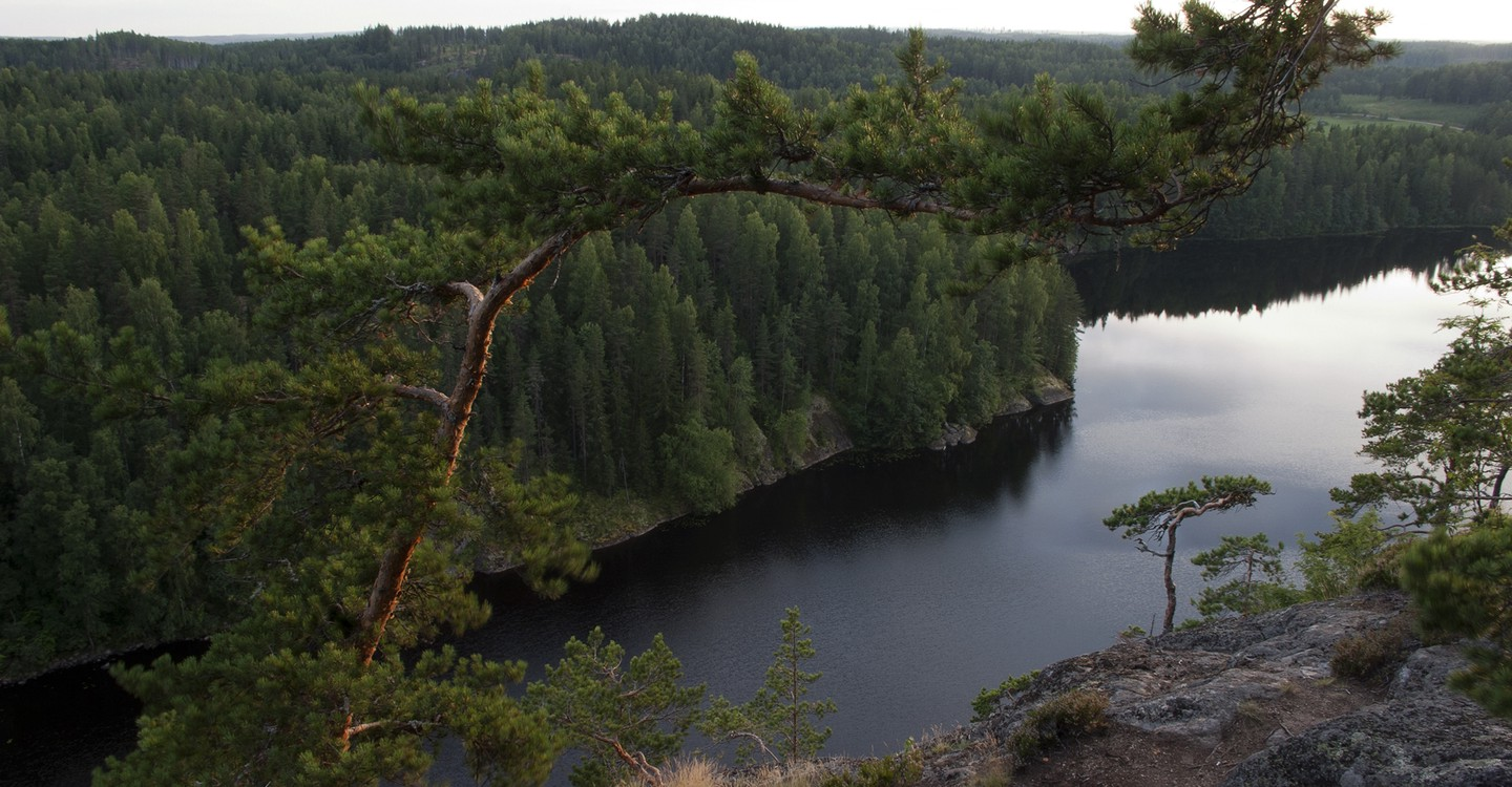 Tale of a Forest - movie: watch streaming online
