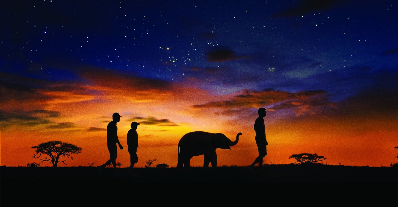 Naledi: A Baby Elephant' s Tale