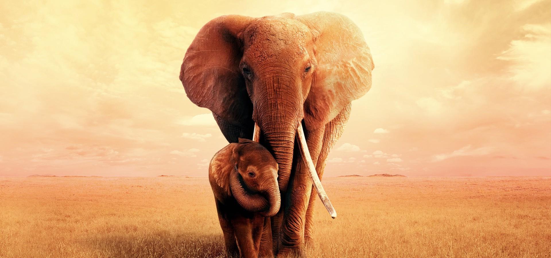 Az elefántkirálynő