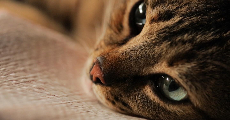 Kedi - Isztambul macskái