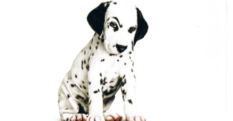 102 Dalmatians Movie Watch Stream Online