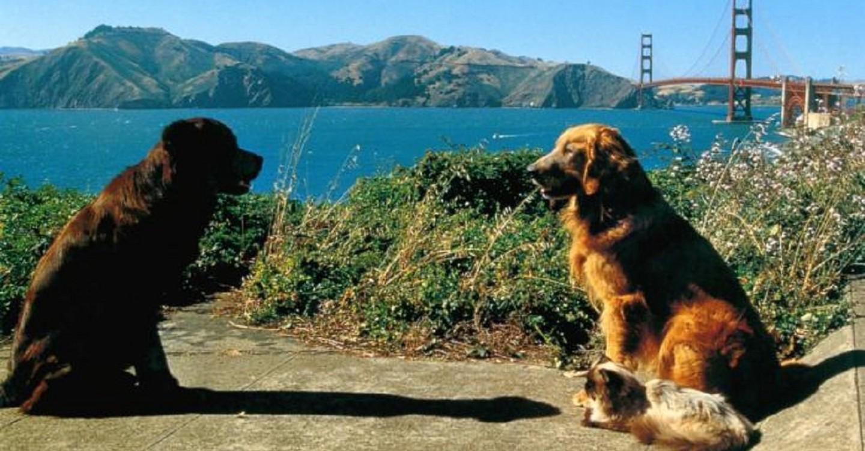 Homeward Bound II: Lost in San Francisco backdrop 1