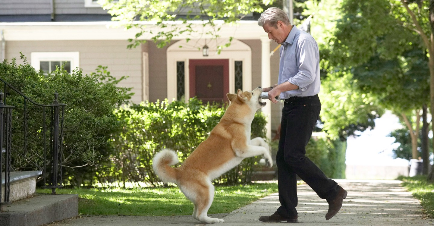 hachi a dogs tale download free