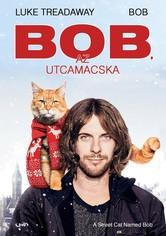 Bob, az utcamacska