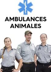 Ambulances animales
