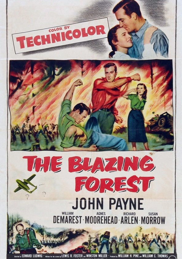 The Blazing Forest