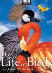 La Vida de las Aves