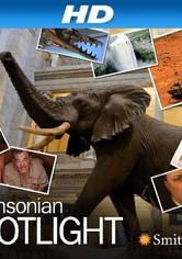 Smithsonian Spotlight