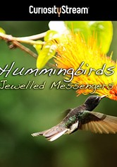 Hummingbirds: Jewelled Messengers