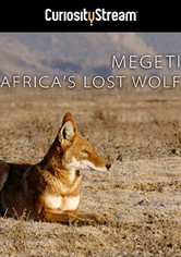 Africa's Lost Wolves