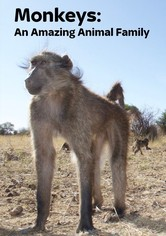 Monkeys: An Amazing Animal Family
