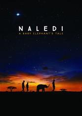 Naledi, L'Éléphanteau Orphelin