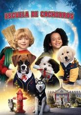 Escuela de cachorros