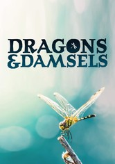 Dragons and Damsels