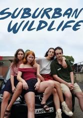 Suburban Wildlife
