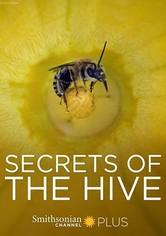 Secrets of the Hive