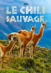 Wild Chile: Un viaje salvaje
