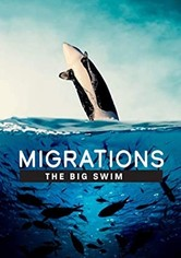 Migrations: The Big Swim