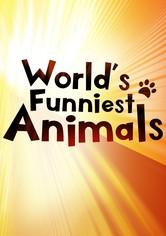 The World's Funniest Animals