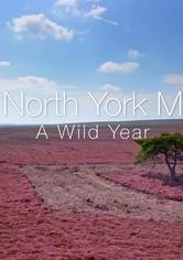 A Wild Year