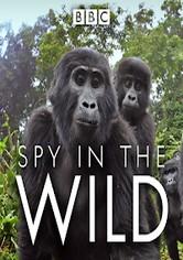 Spy in the Wild