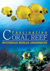 Fascination Coral Reef  Mysterious Worlds Underwater