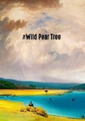Der wilde Birnbaum