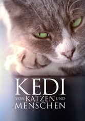 Kedi: Von Katzen und Menschen