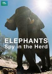 Elephants: Spy in the Herd