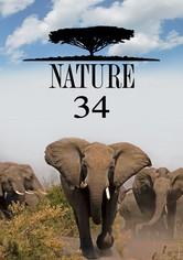 Nature Stream Jetzt Serie Online Finden Anschauen