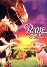 Babe - Maialino coraggioso